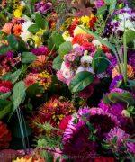Dahlia's Budd's / aka Backyard Bloomers